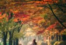 woman under fall leaves